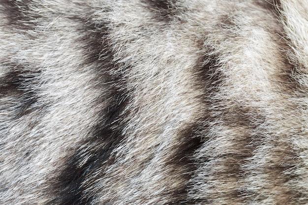 Texture de fourrure de chat rayée, laine se bouchent