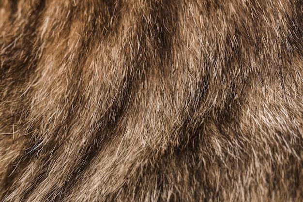 Texture de la fourrure d'un chat