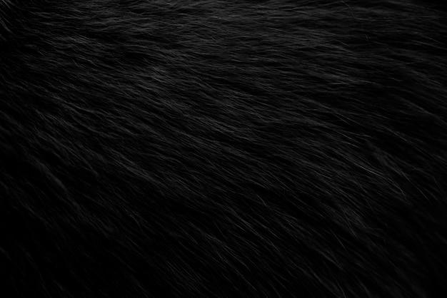 Texture de fourrure noire et blanche closeup avec fond noir
