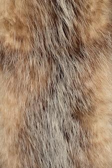 Texture de fourrure