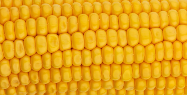 Texture de graines de maïs