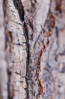 Texture de gros bois