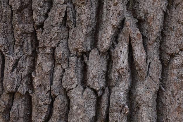 Texture de gros plan d'écorce d'arbre ondulé rugueux