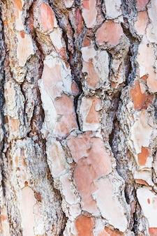 Texture de gros plan d'écorce d'arbre