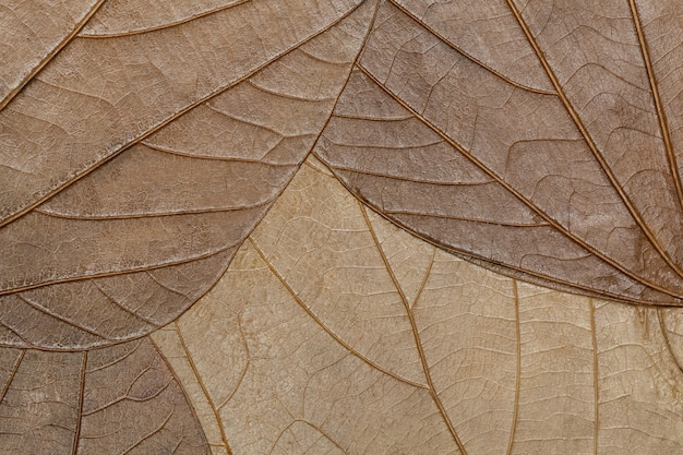 Texture de gros plan de feuilles séchées.