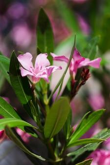 Texture de gros plan de fleurs