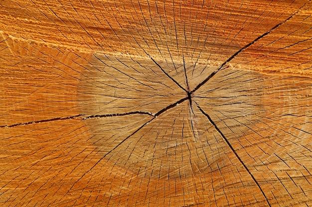 Texture et gros plan de tronc d'arbre scié