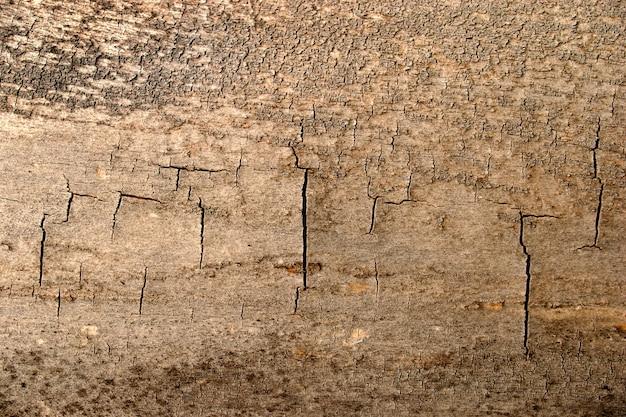Texture grunge de bois fissuré