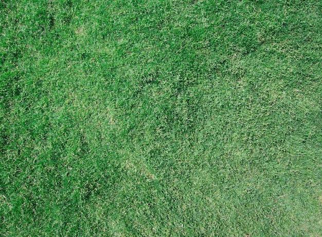 Texture d'herbe d'un champ