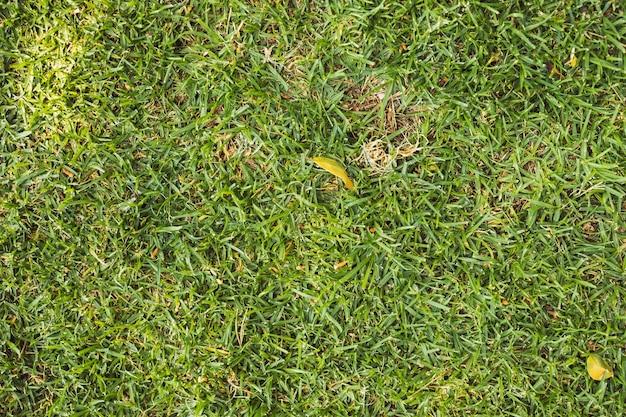 Texture d'herbe verte brillante