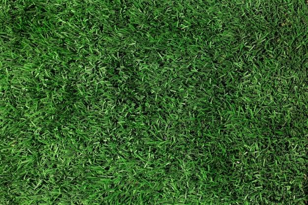 Texture de l'herbe verte gros plan