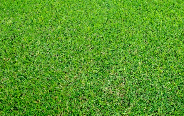 Texture d'herbe verte pour le fond. motif de pelouse verte et fond de texture.