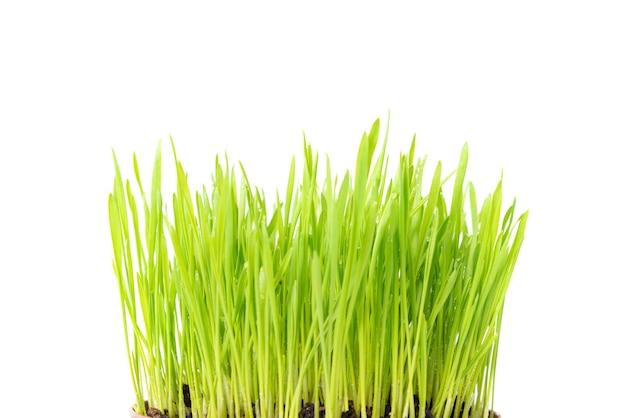 Texture d'herbe verte en terre isolé sur fond blanc