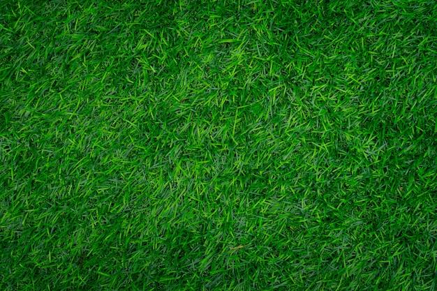 Texture d'herbe verte.