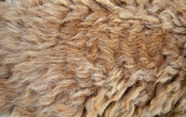 Texture de laine de mouton longue pour textile textile