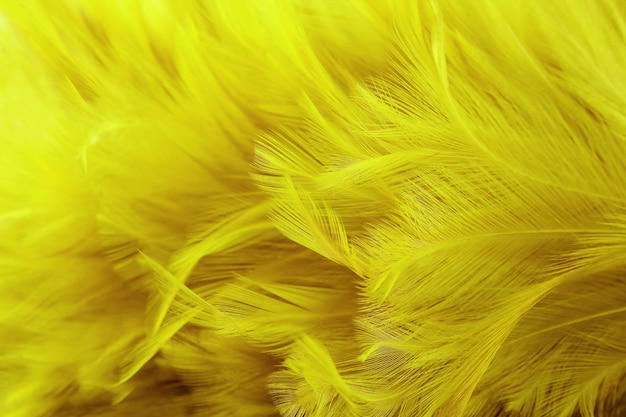 Texture de modèle d'aile de plume jaune doré pour le travail d'art de fond et de conception.