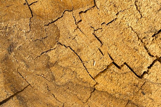 Texture de moignon de chêne fissuré