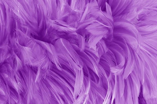 Texture de motif de belles plumes d'oiseau violet.