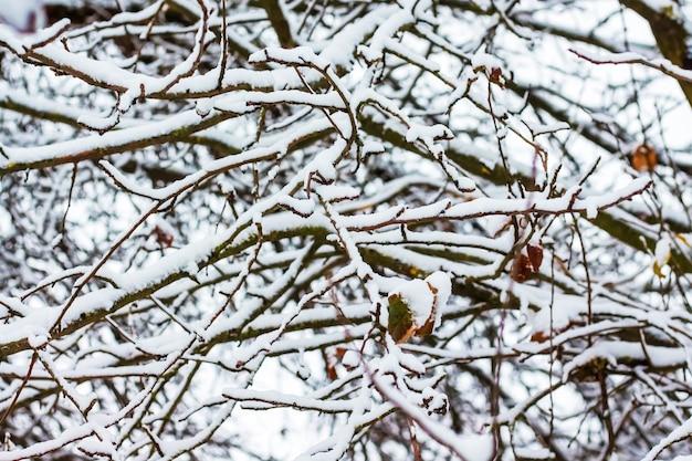 Texture, un motif de branches d'arbres recouvertes de neige_