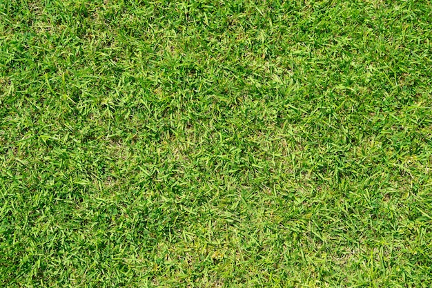 Texture de motif d'herbe pour le fond. pelouse verte luxuriante. fermer.