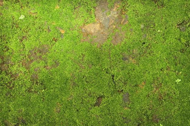 Texture de mousse verte sur fond de mur en pierre