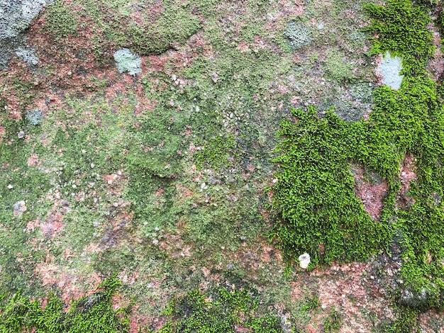 Texture de mousse verte et fond