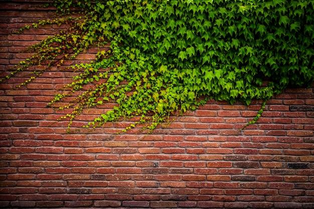 Texture de mur de briques rouges anciennes et feuille verte