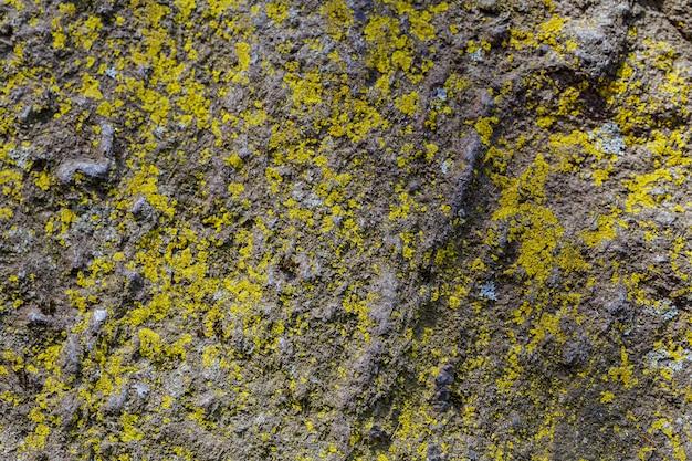 Texture de mur de pierre pour le fond