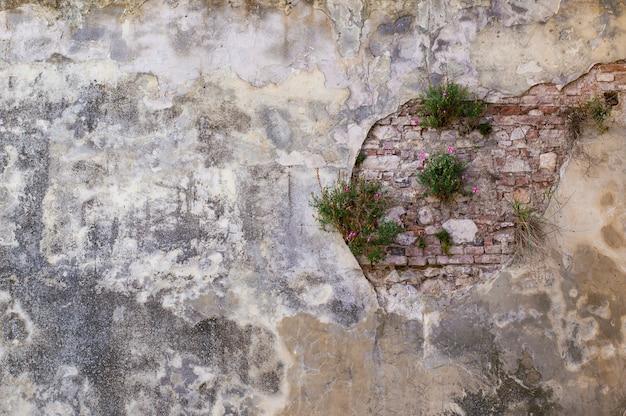 Texture de mur vintage avec des fleurs