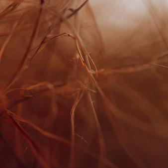 Texture de nombreuses fibres brunes