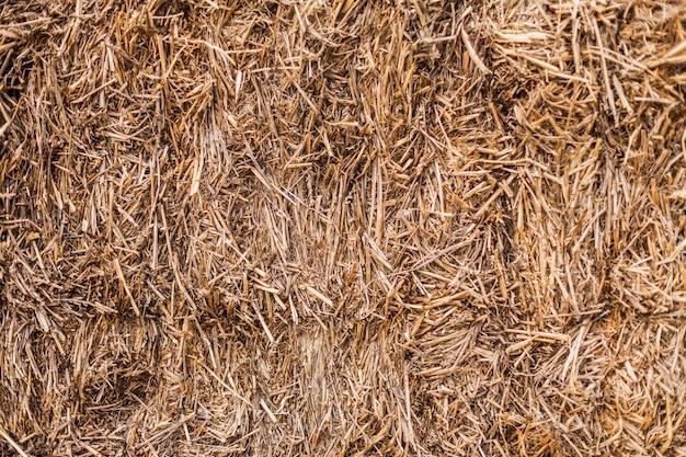Texture de paille sèche