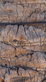 Texture de palmier