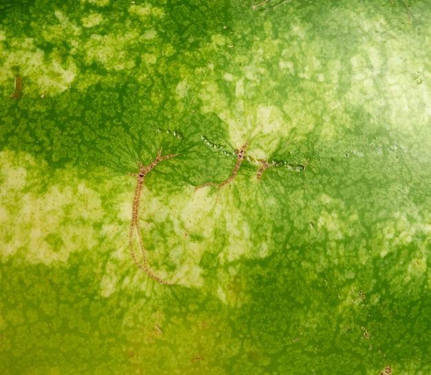 Texture de pastèque rayée verte, plein cadre, gros plan