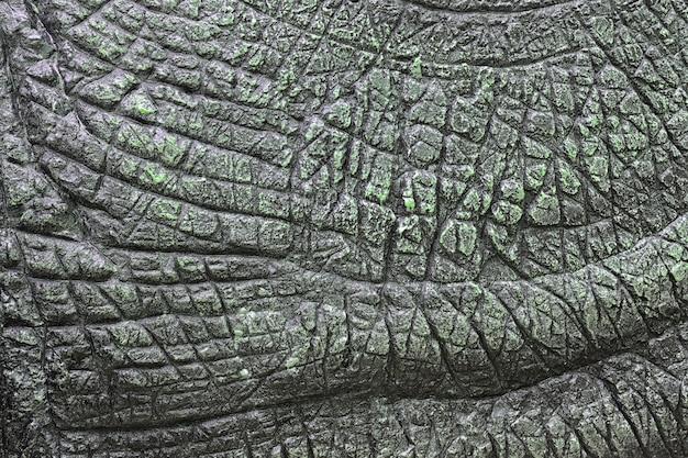 Texture de peau de dinosaure
