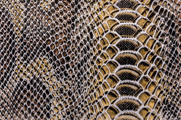 Texture de peau de serpent
