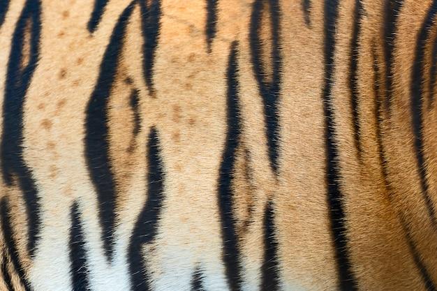 Texture de peau de tigre.