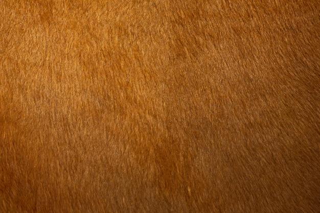 Texture de la peau d'une vache rouge, gros plan.