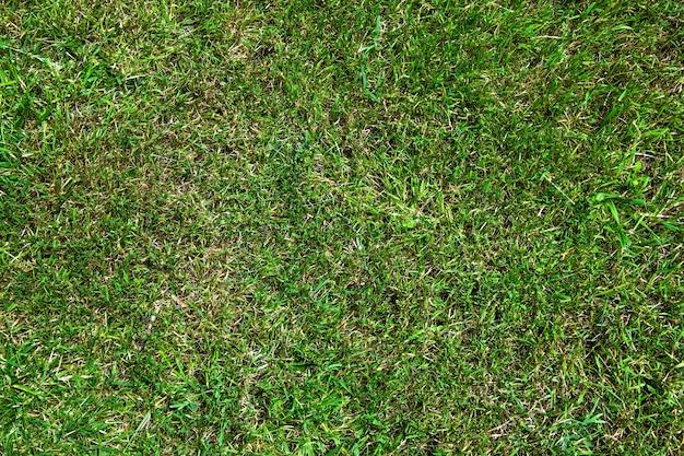Texture de pelouse verte avec de l'herbe sèche