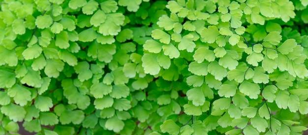 Texture de petites feuilles vertes.