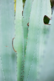 Texture de plante de feuilles avec fond.