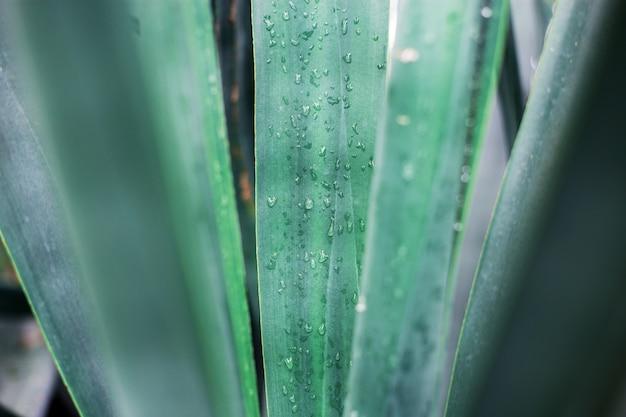 Texture de la plante.