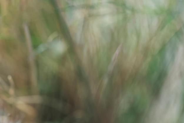 Texture des plantes floues