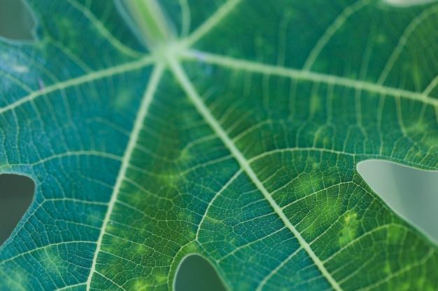 Texture des plantes en gros plan