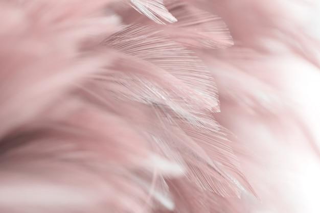 Texture de plume d'oiseau pour le fond