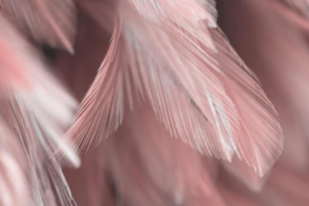 Texture de plume de poules oiseaux flou