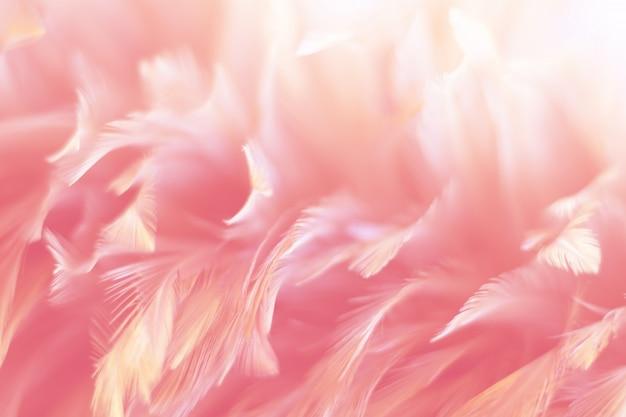 Texture de plume de poulet pour le fond