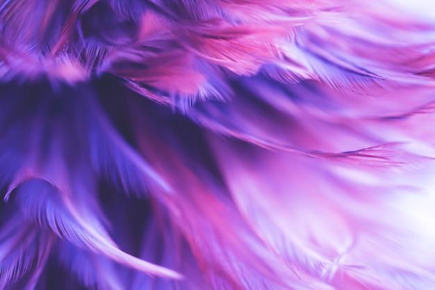 Texture de plumes de poulet flou oiseaux