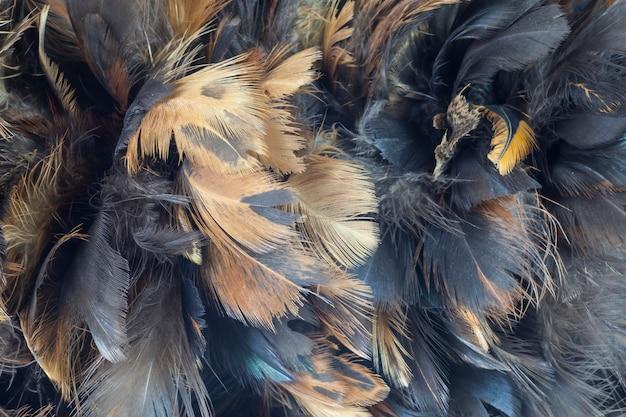 Texture de plumes de poulet gros plan pour le fond