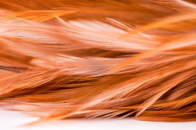 Texture de plumes de poulets pour le fond