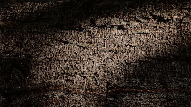 Texture en relief de l'écorce et de l'ombre en forêt.